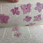 Trocknung im Buch